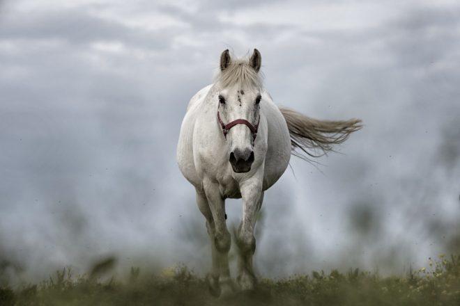 Klub koji je doveo konja u svoj prostor izgubio licencu