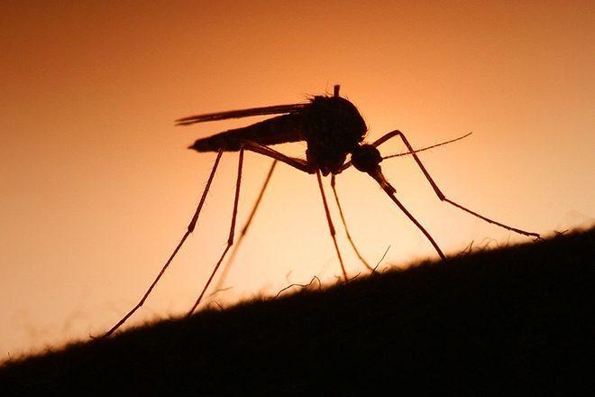 Studija pokazala kako Skrillexova glazba štiti od uboda komaraca
