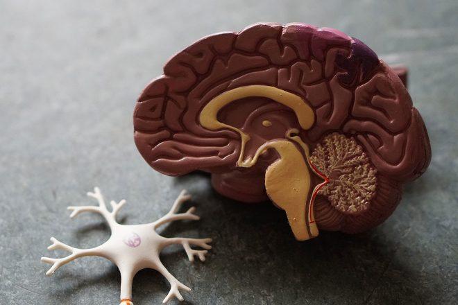 Evo što devet najčešće korištenih droga rade mozgu