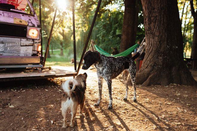 Pomozite psima i podržite dobru priču