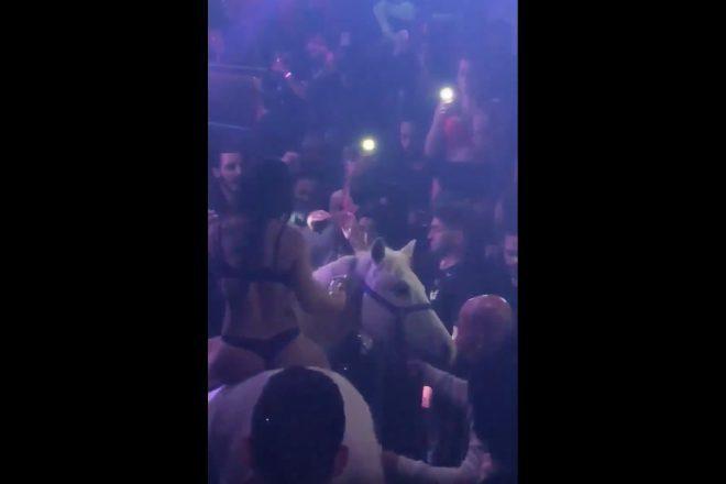 Policija istražuje klub u Miamiu koji je u svoj prostor doveo konja
