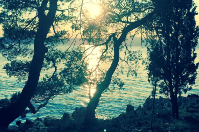 Olive Groove Festival ima svoje prvo izdanje na otoku Krku