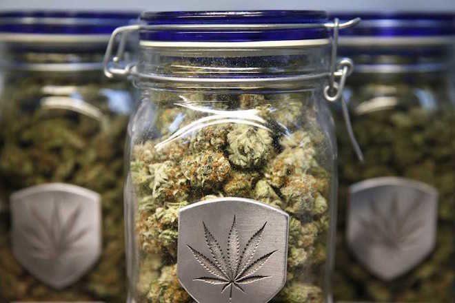 Očekivana prodaja od pola tone marihuane u Kaliforniji ove godine